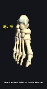 足部・足の甲
