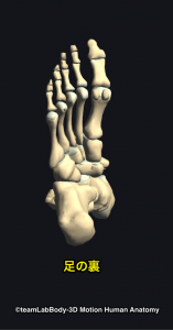 足部・足の裏