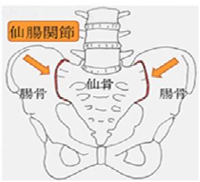 仙腸関節2