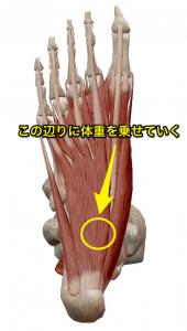 脛骨直下~やや内側