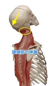 後頭下筋群 頭頸部伸展