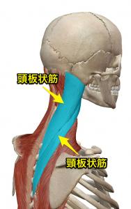 頭板状筋・頸板状筋