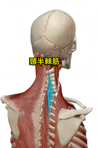 「頸部 筋肉 棘筋」の画像検索結果