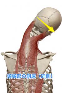 板状筋 頭頸部の側屈(同側)