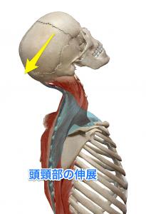 板状筋 頭頸部の伸展