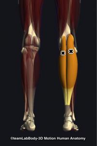 腓腹筋トリガーポイント