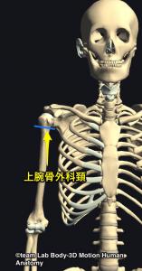 上腕骨・上腕骨外科頚