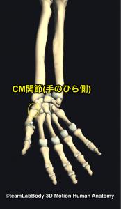 母指CM関節