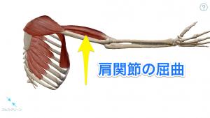 肩関節の屈曲