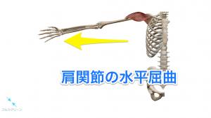 肩関節の水平屈曲