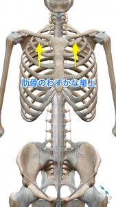 肋骨の挙上