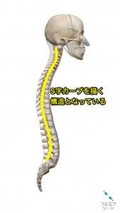 脊柱の彎曲
