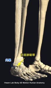 外果・前距腓靭帯