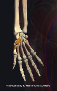 母指対立筋トリガーポイント