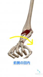 前腕の回内