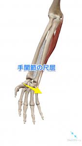 手関節の尺屈