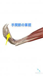 手関節の掌屈