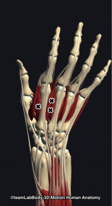 背側骨間筋トリガーポイント
