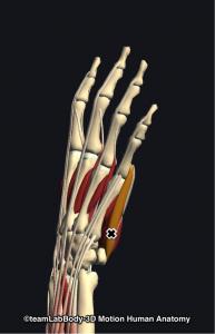 小指外転筋トリガーポイント