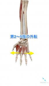 第2~5指の外転