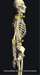 肩峰・肘頭