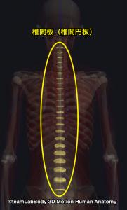 椎間板・椎間円板