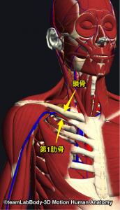 胸郭出口症候群の部位