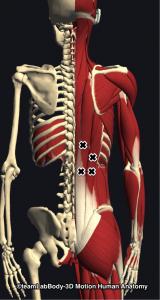 脊柱起立筋トリガーポイント
