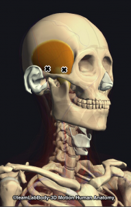 側頭筋・トリガーポイント