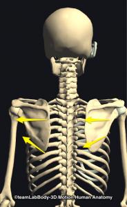 肩甲骨の回旋
