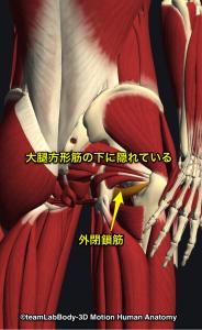 股関節深層外旋6筋