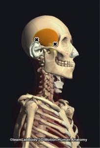 側頭筋トリガーポイント